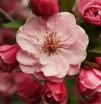 Отдушка косметическая Гранат и вишневый цветок 10 мл - Все для мыла ручной работы - интернет-магазин Blesk-ekb.ru, Екатеринбург