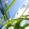 Утренняя свежесть - отдушка косметическая 10 мл - Все для мыла ручной работы - интернет-магазин Blesk-ekb.ru, Екатеринбург
