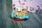 Силиконовая форма Кошка в лукошке 3D 1 шт - Все для мыла ручной работы - интернет-магазин Blesk-ekb.ru, Екатеринбург