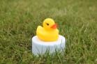 Силиконовая форма Желтая уточка мини 3D 1 шт  - Все для мыла ручной работы - интернет-магазин Blesk-ekb.ru, Екатеринбург