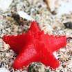 Силиконовая форма Морская звезда 2D - Все для мыла ручной работы - интернет-магазин Blesk-ekb.ru, Екатеринбург