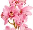Отдушка косметическая Орхидея и жасмин 10 мл  - Все для мыла ручной работы - интернет-магазин Blesk-ekb.ru, Екатеринбург