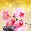 Отдушка косметическая Розовая орхидея и Янтарь США 10 мл  - Все для мыла ручной работы - интернет-магазин Blesk-ekb.ru, Екатеринбург