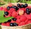 Отдушка косметическая Спелые ягоды 10 мл - Все для мыла ручной работы - интернет-магазин Blesk-ekb.ru, Екатеринбург