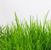 Отдушка косметическая Свежескошенная трава 10 мл     - Все для мыла ручной работы - интернет-магазин Blesk-ekb.ru, Екатеринбург