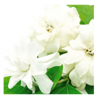 WHITE GARDENIA (Белая гардения) ароматизатор  50 гр - Все для мыла ручной работы - интернет-магазин Blesk-ekb.ru, Екатеринбург