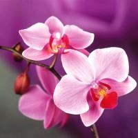 Орхидея - отдушка косметическая 100 гр - Все для мыла ручной работы - интернет-магазин Blesk-ekb.ru, Екатеринбург